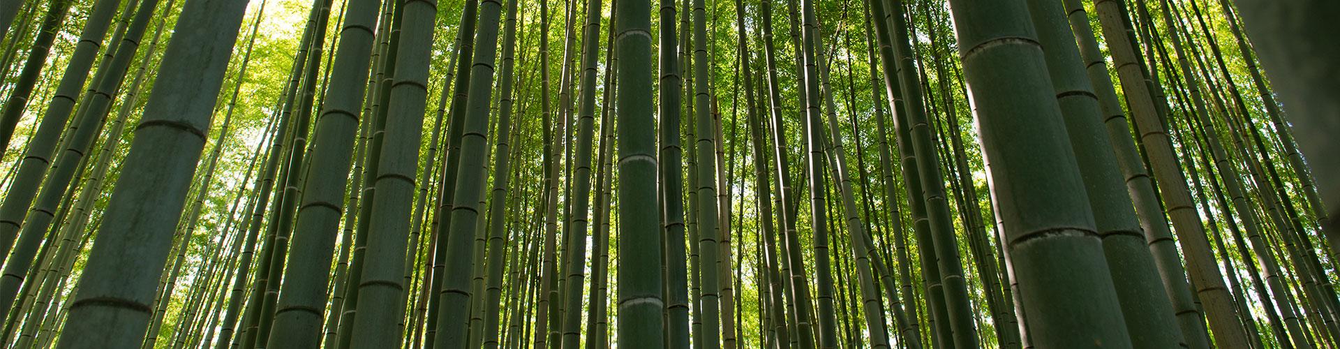 sankara Masajes y Tratamientos en Andorra bambus